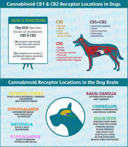 CBD effects for dogs