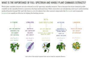 Cannabinoids Infographic